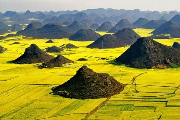 Рапсовые поля в Люопинге
